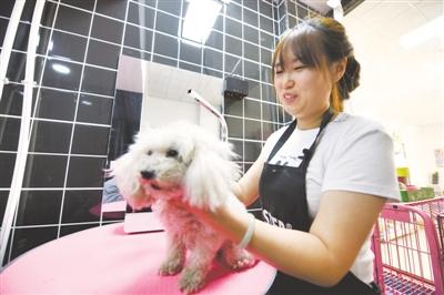 <p>洗澡前,韦莹莹先将小狗的毛发梳开。</p>