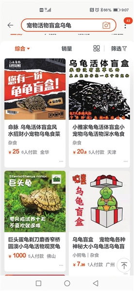 买宠物盲盒货到却是乌龟尸体