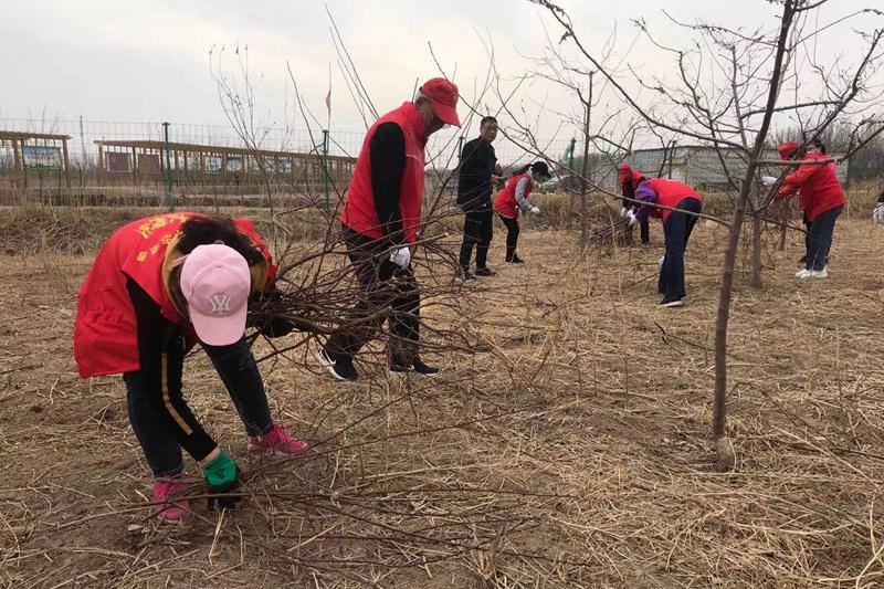 志愿服务助力塔桥村果业发展